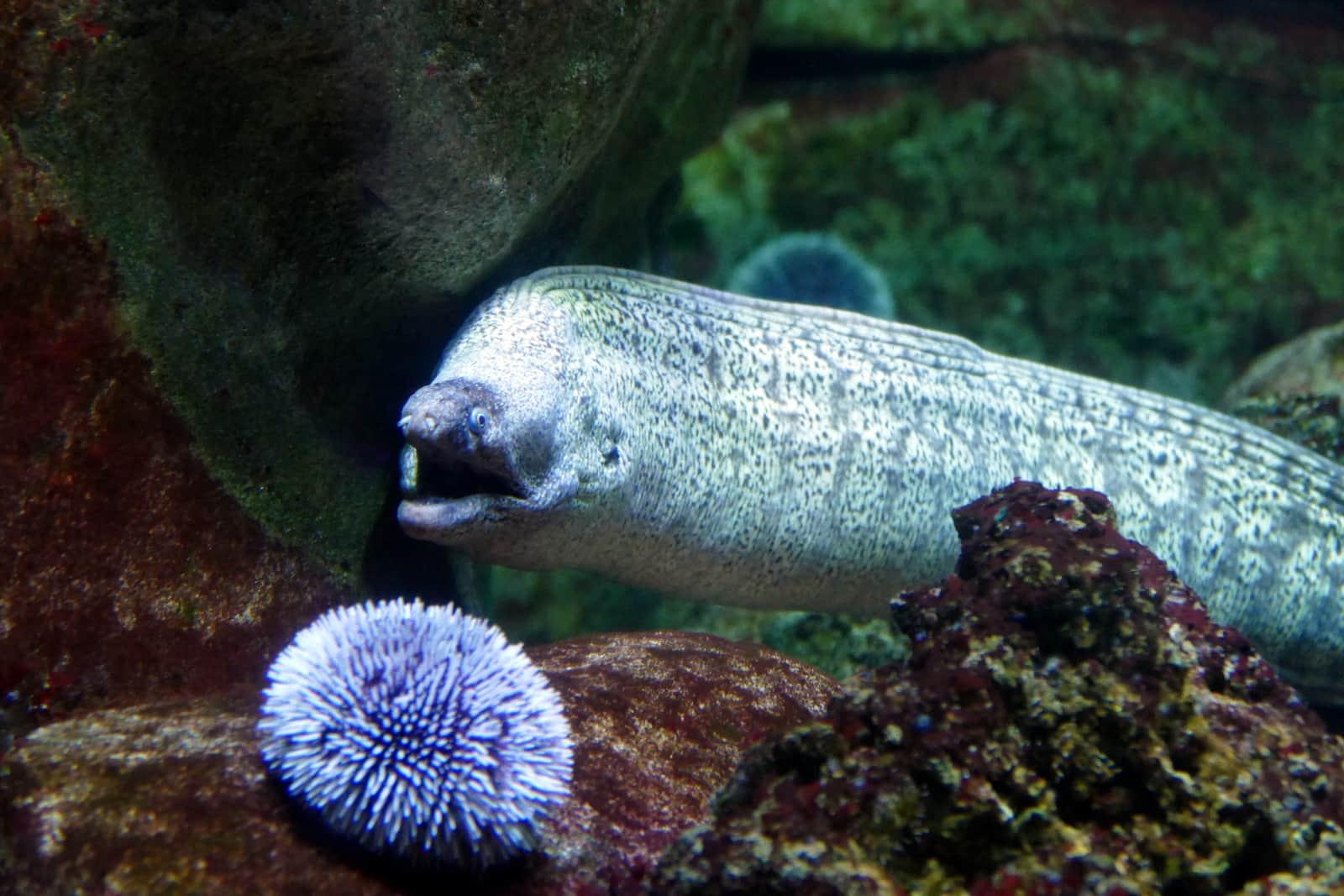 aquarium de horaires