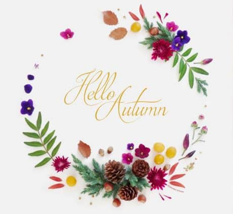 hello automne barbatrucs