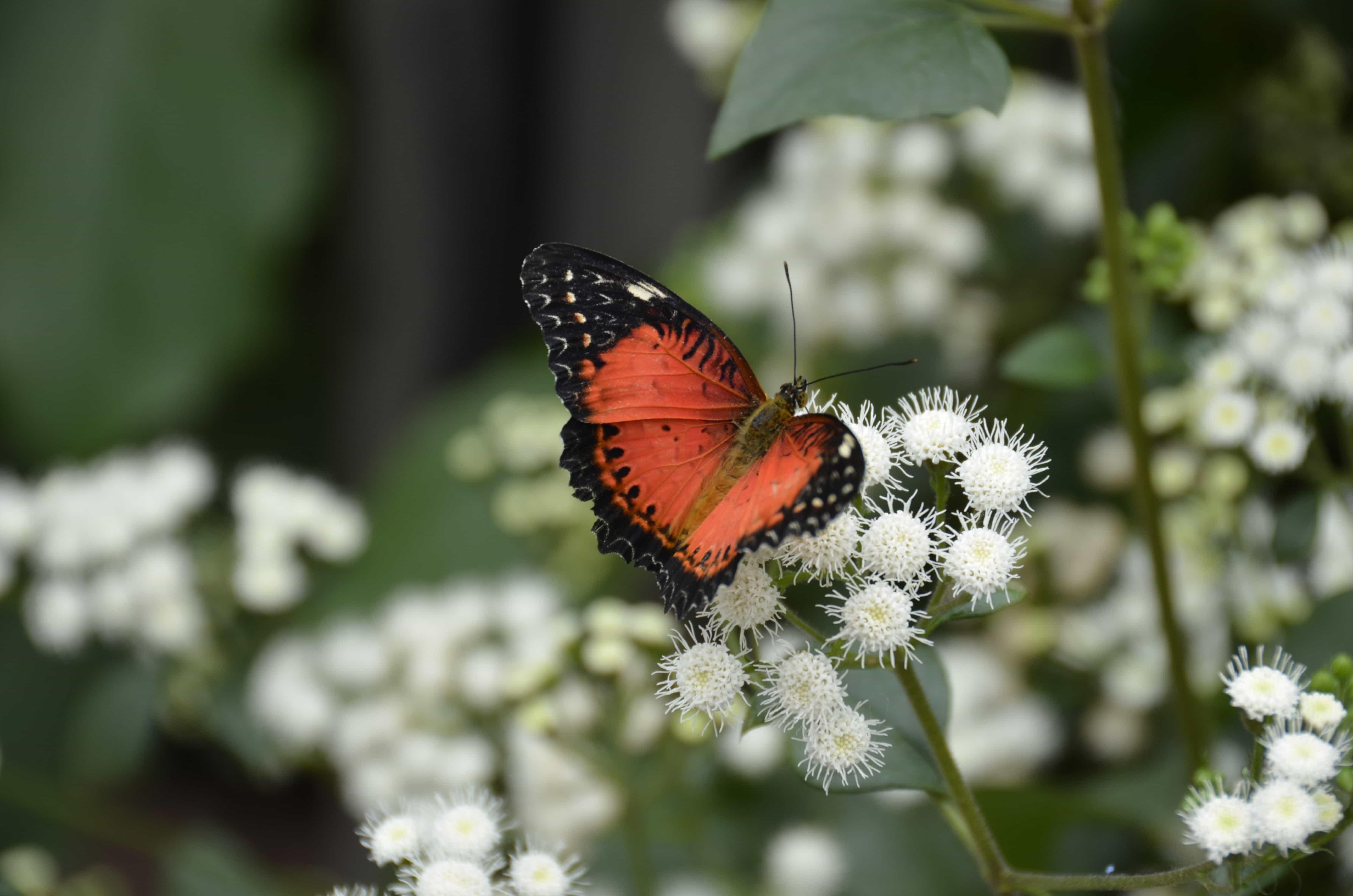 papillons jardin botanique montréal