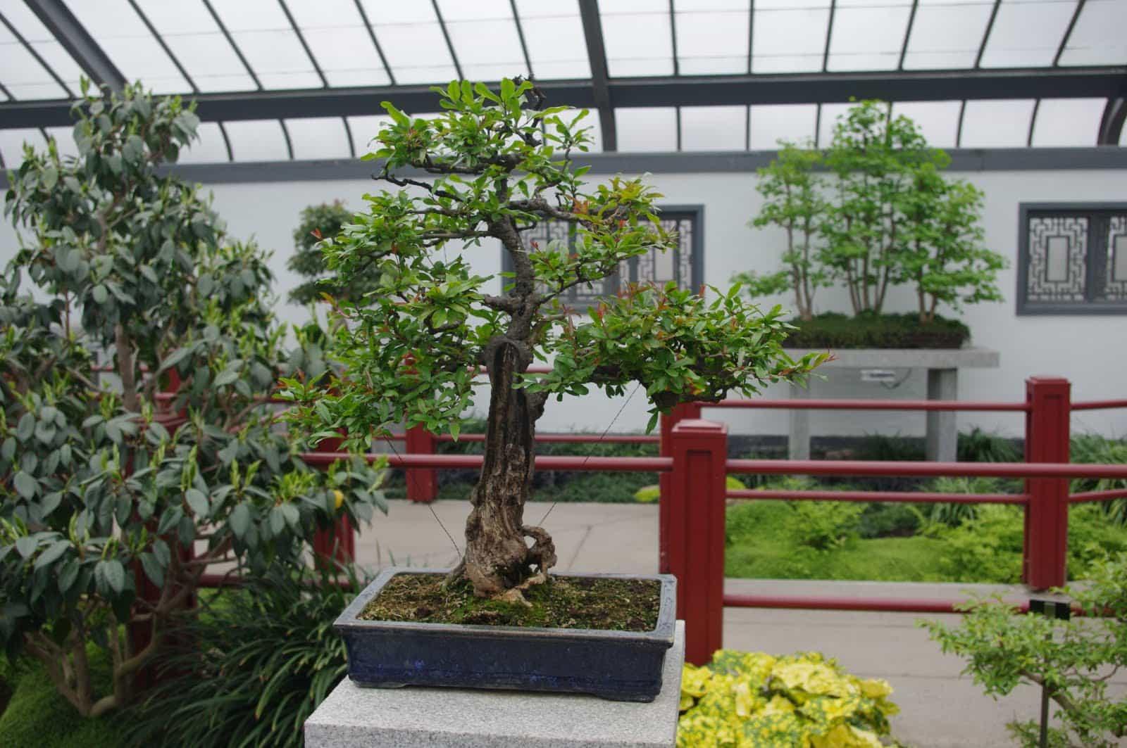 jardin japonais jardin botanique montréal
