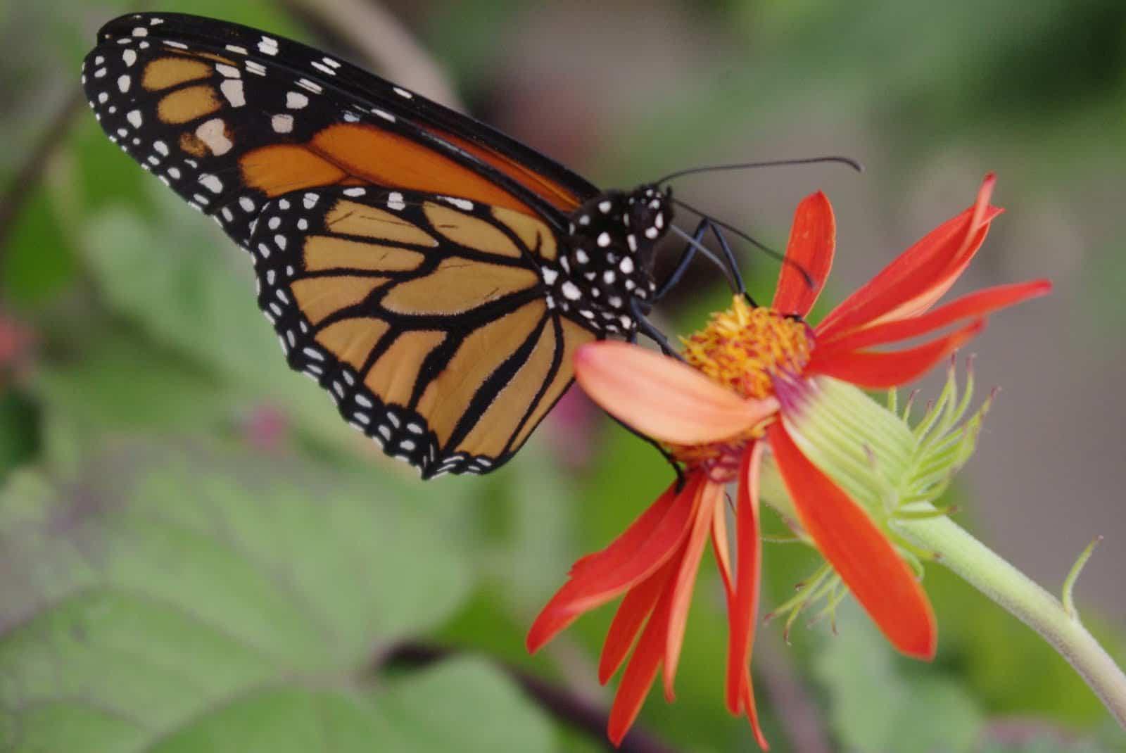 papillon jardin botanique montréal