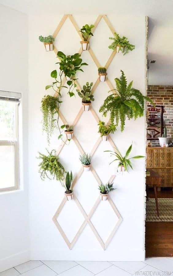 plantes mur intérieur