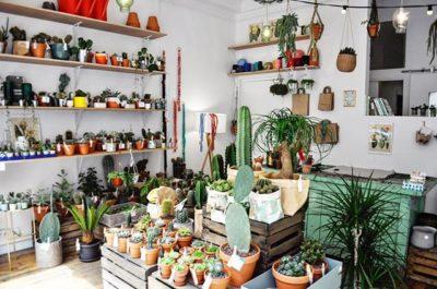 jardin le cactus club concept store vegetal