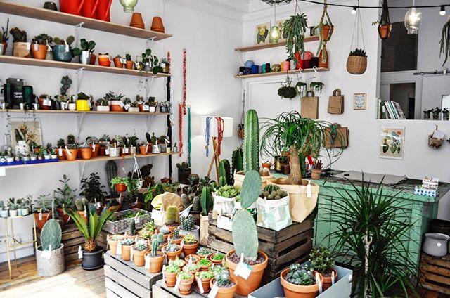 le cactus club concept store vegetal