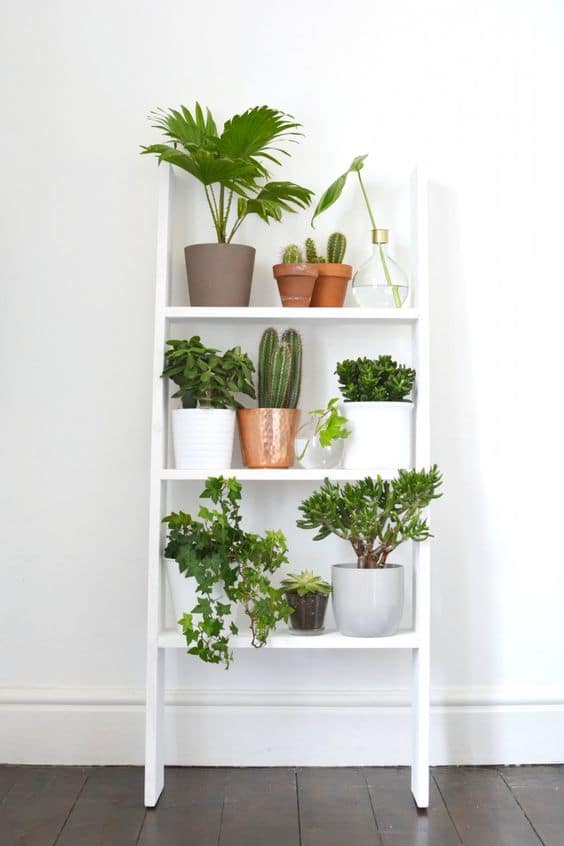 étagère murale plante intérieur jardin