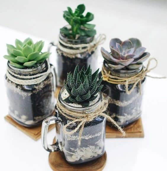 jar plante diy succulente cactus bocal