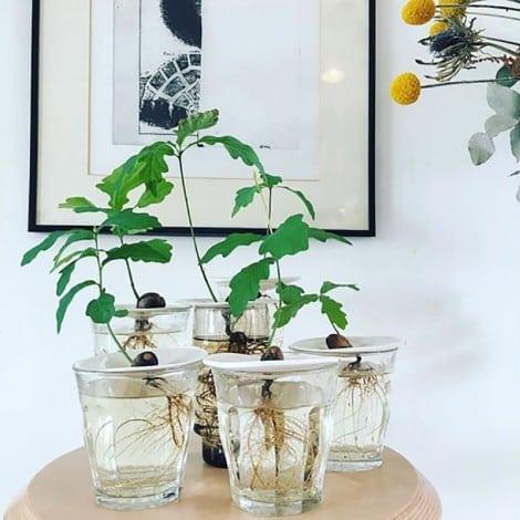 sprout plantes germer noyaux