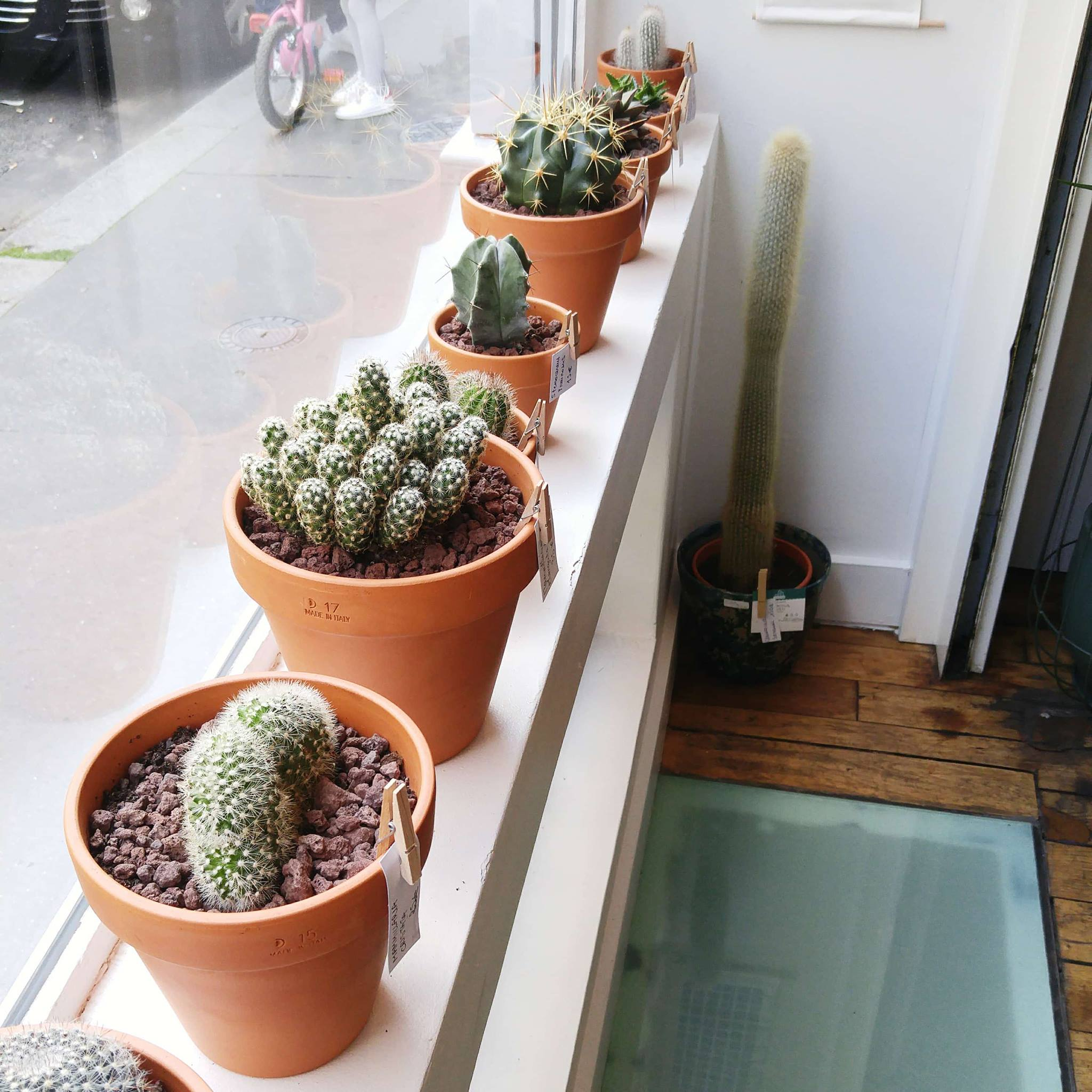 Atelier Terrarium Au Cactus Club Barbatrucs