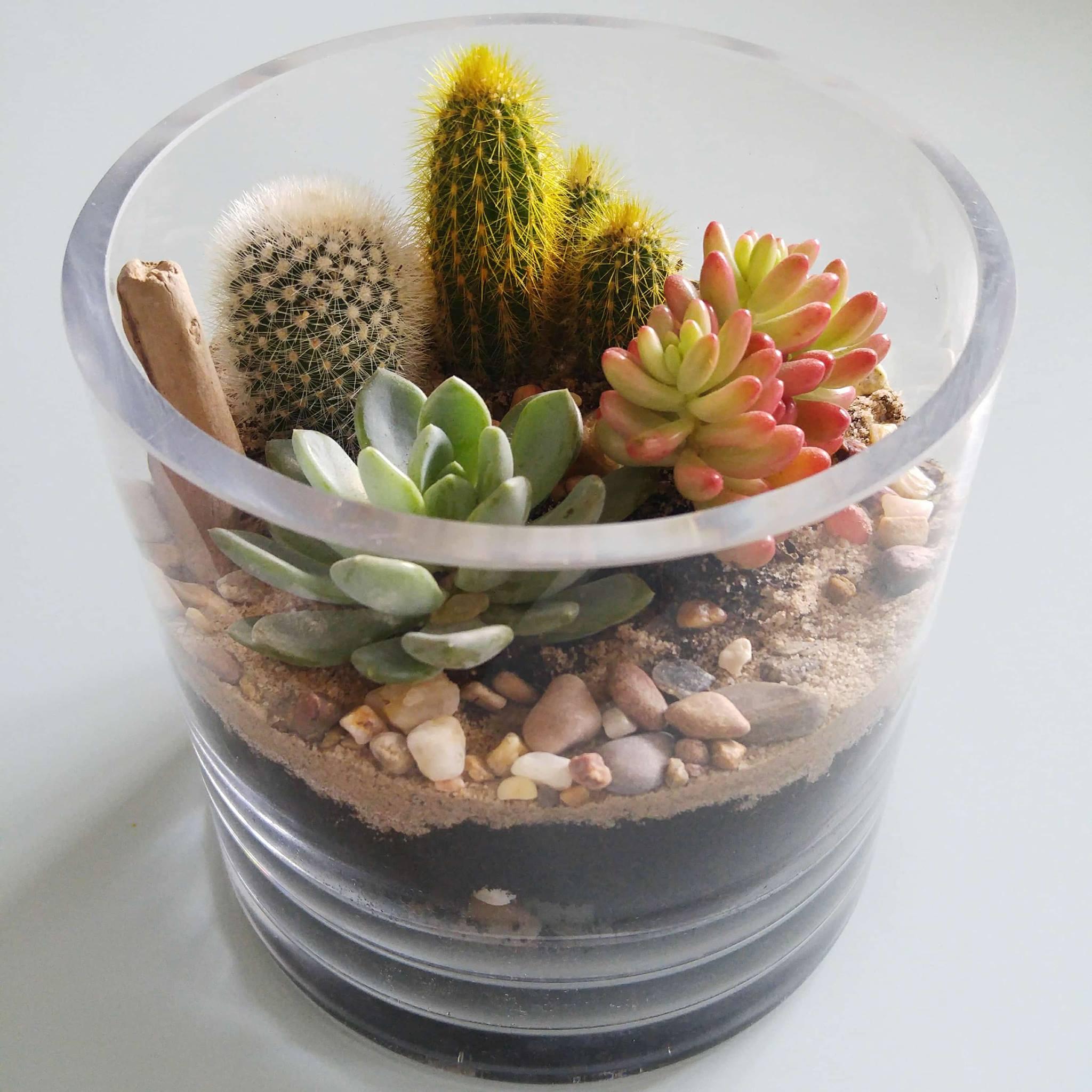 réaliser terrarium diy le cactus club atelier